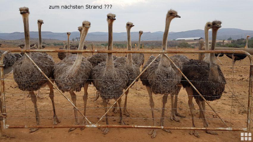 MoiplaasStrauenfarm_1280x720
